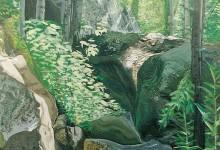 Veduta di un bosco amiatino
